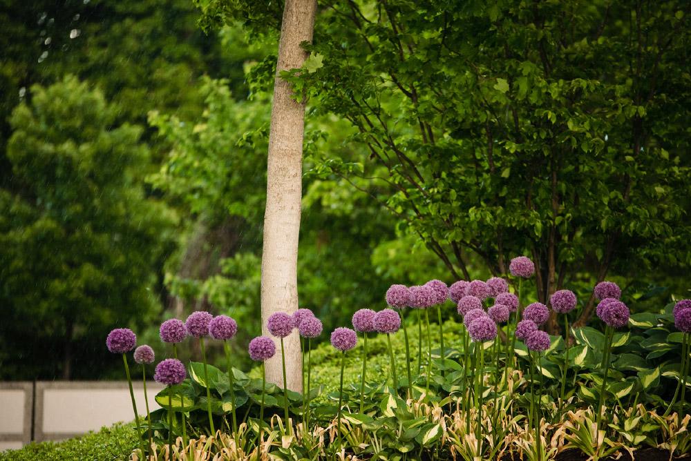 Detail of flower garden, trees and shrubs